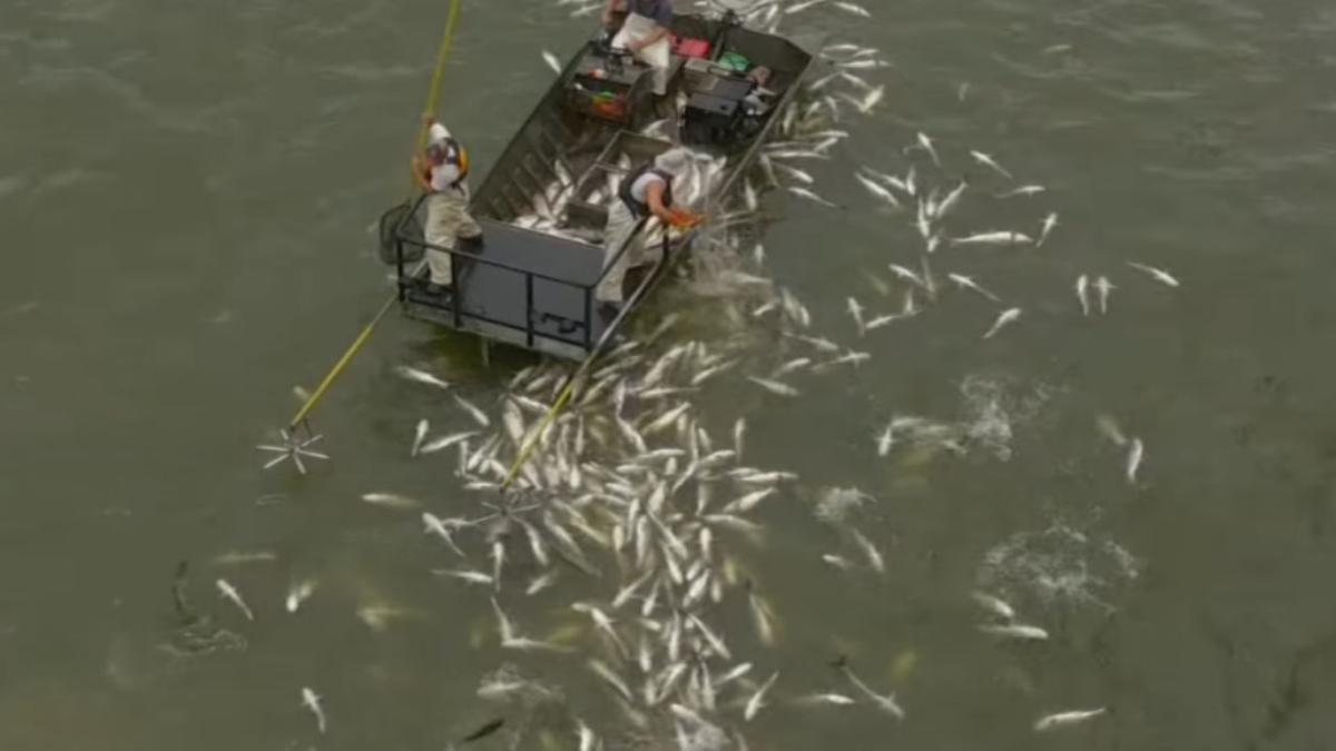 and Asian questions article carp response