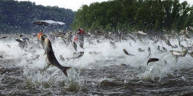Asian carp article and response questions